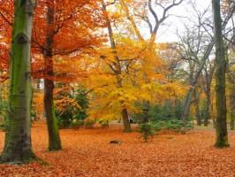 park_autumn_garden_216882